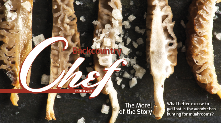 The Morel of the Story